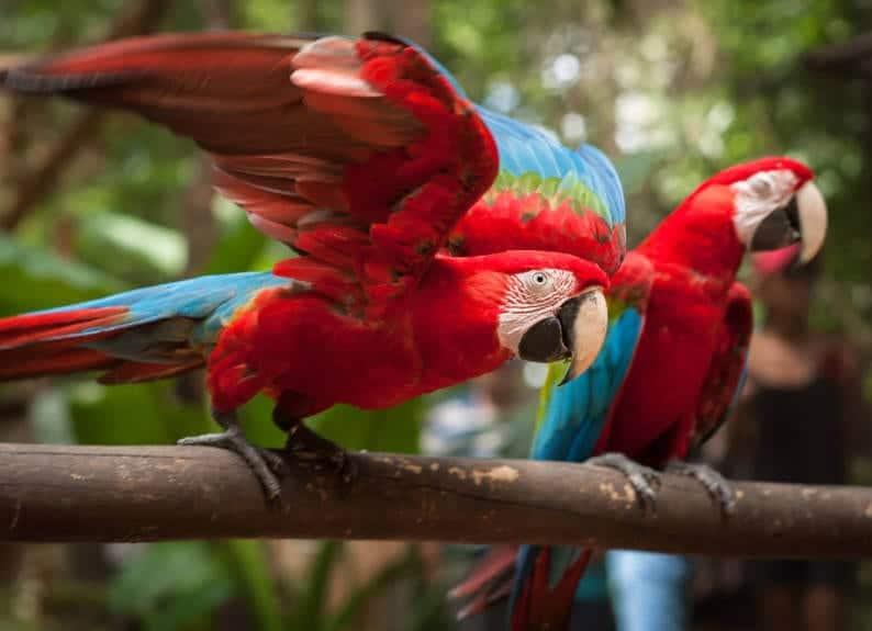 Bird Park in Foz do Iguaçu (Foto: Divulgação / Parque das Aves)